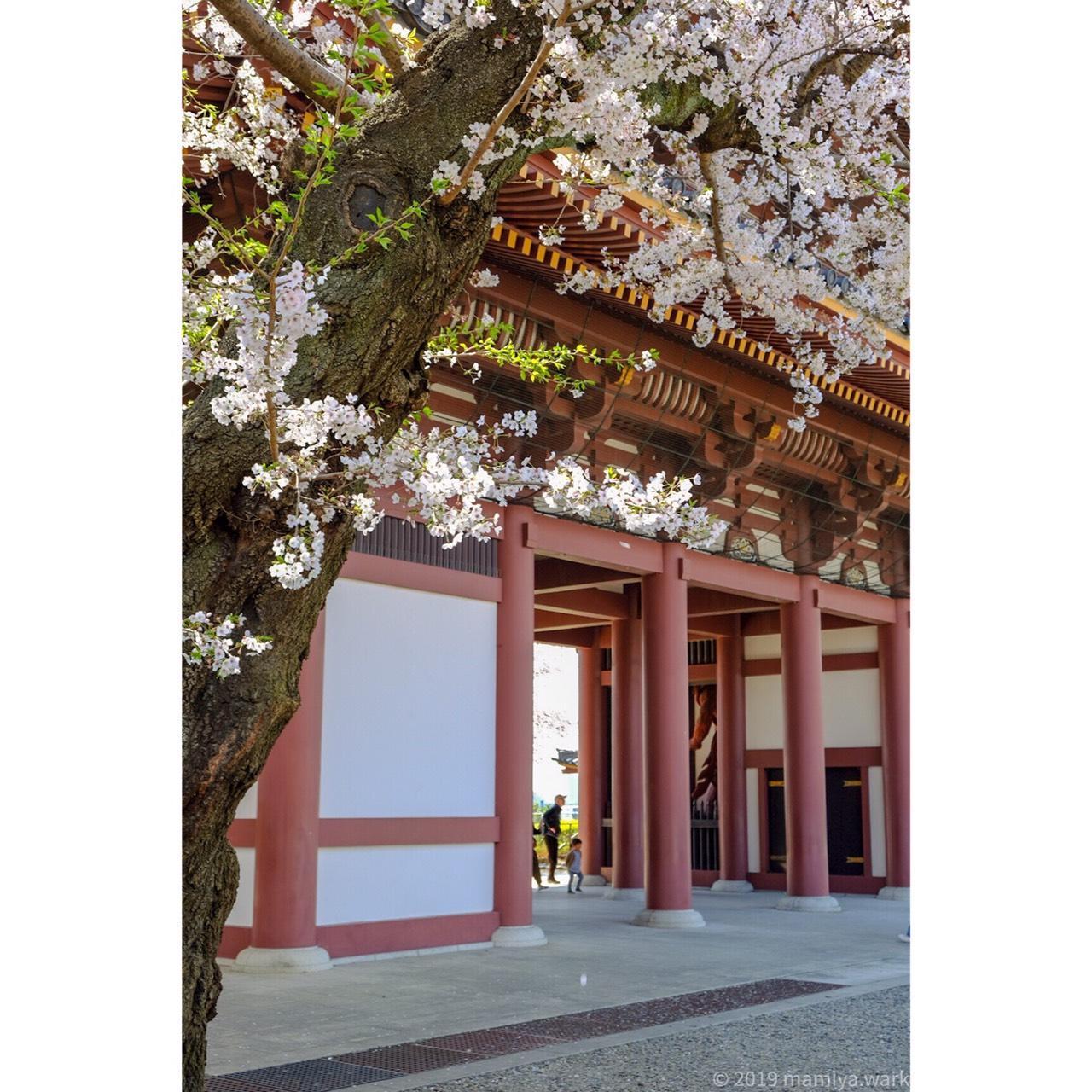 仁王門と桜2