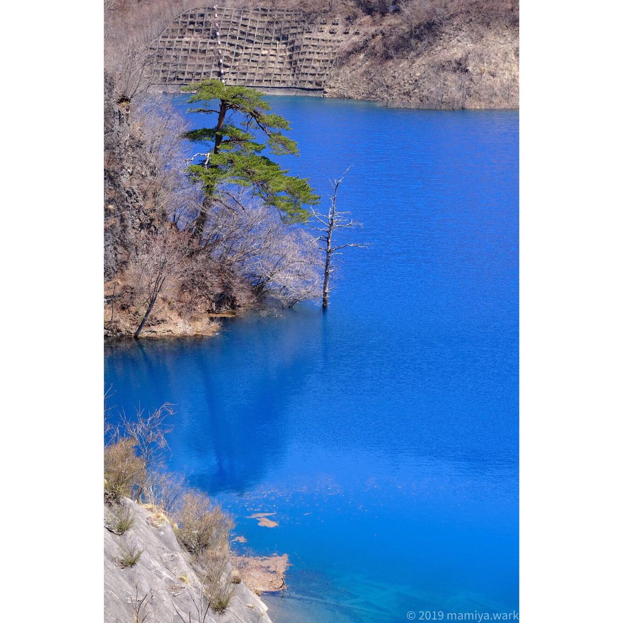 湖面から突き出た枯れ木1