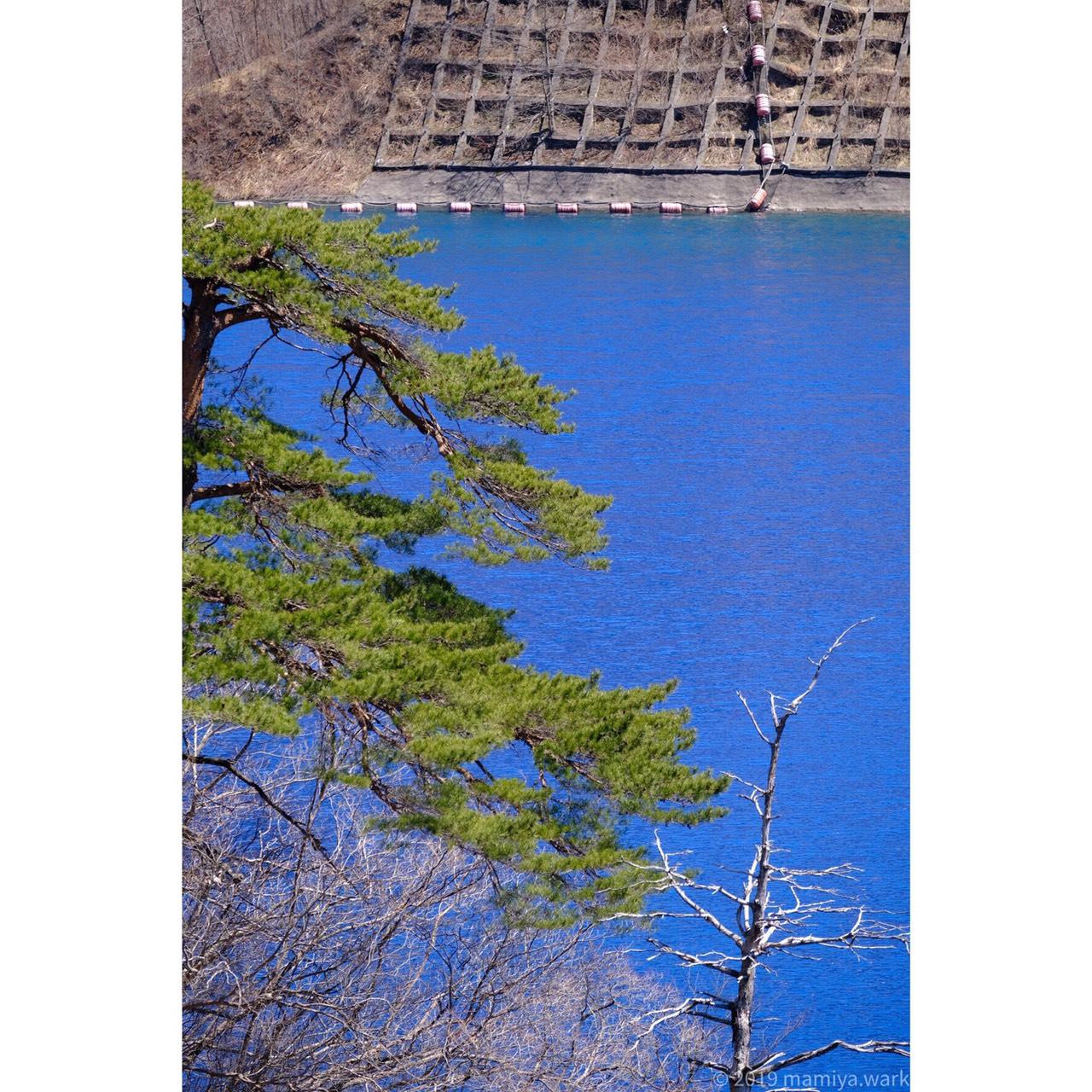 湖面から突き出た枯れ木2