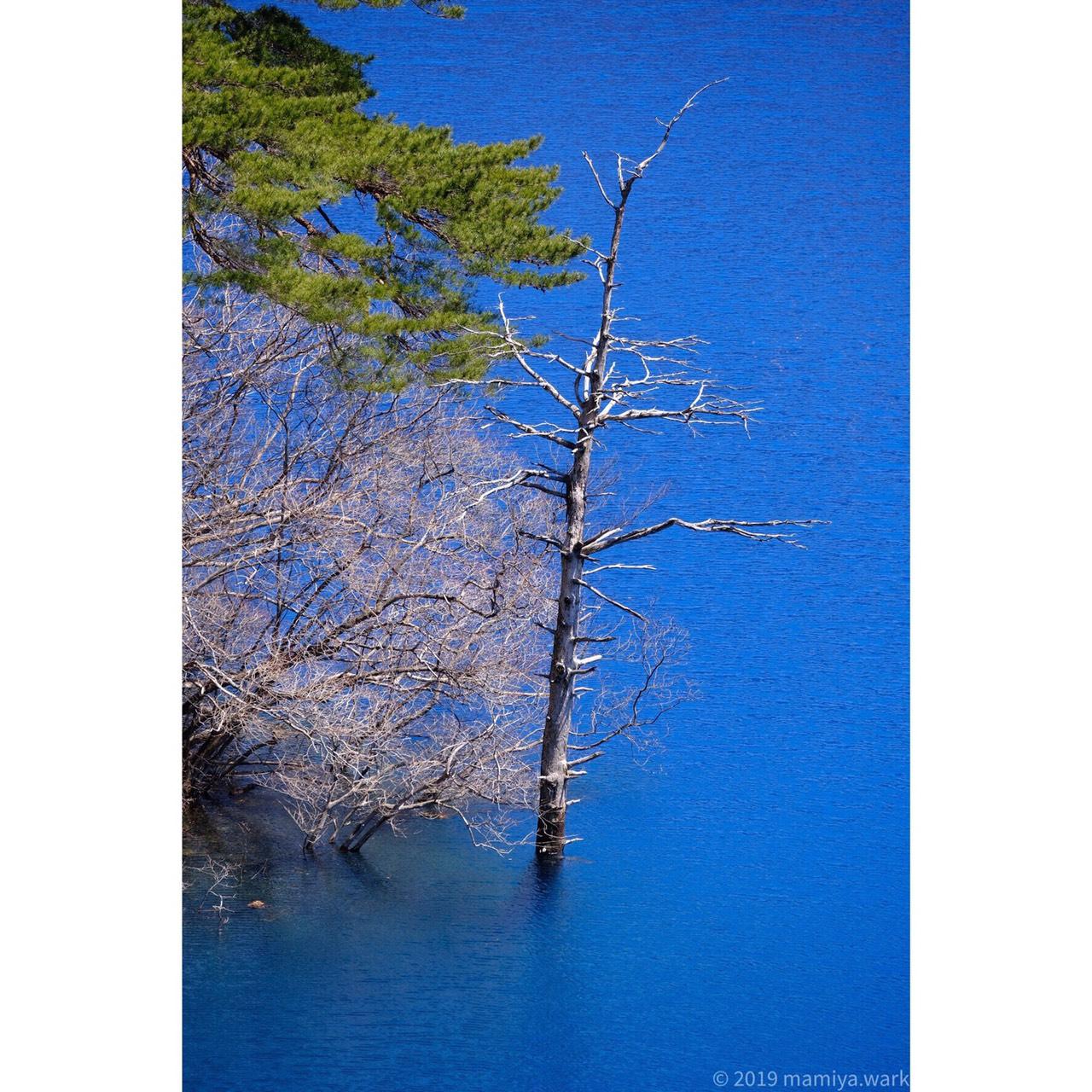 湖面から突き出た枯れ木3