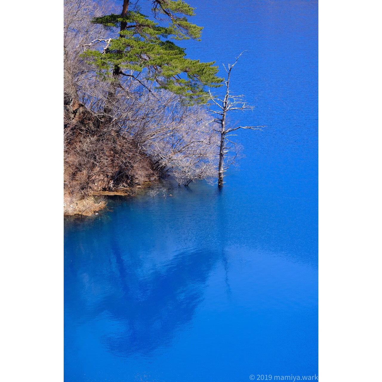 湖面から突き出た枯れ木4