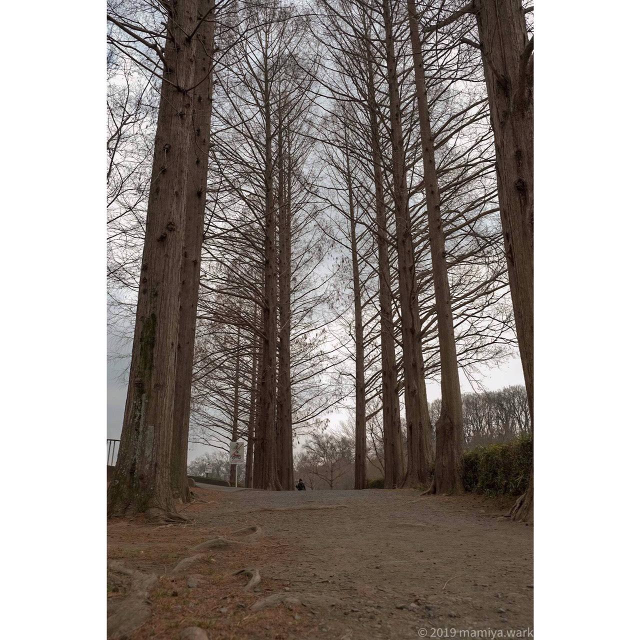 丸山公園5