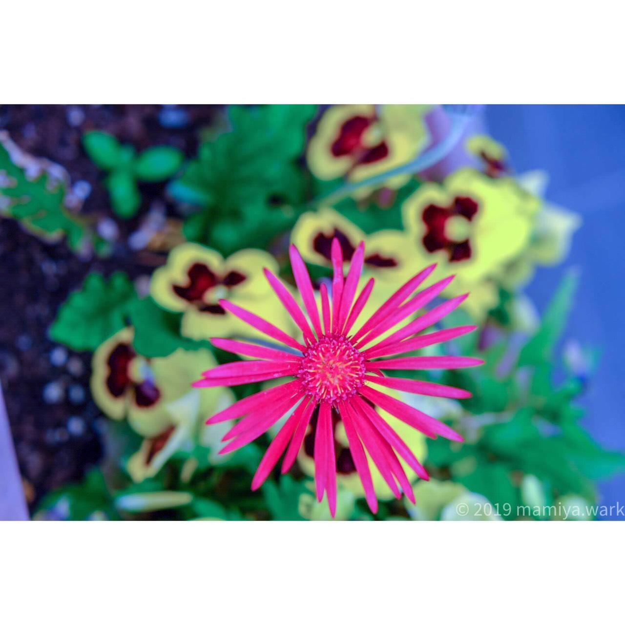 外に咲いてた花