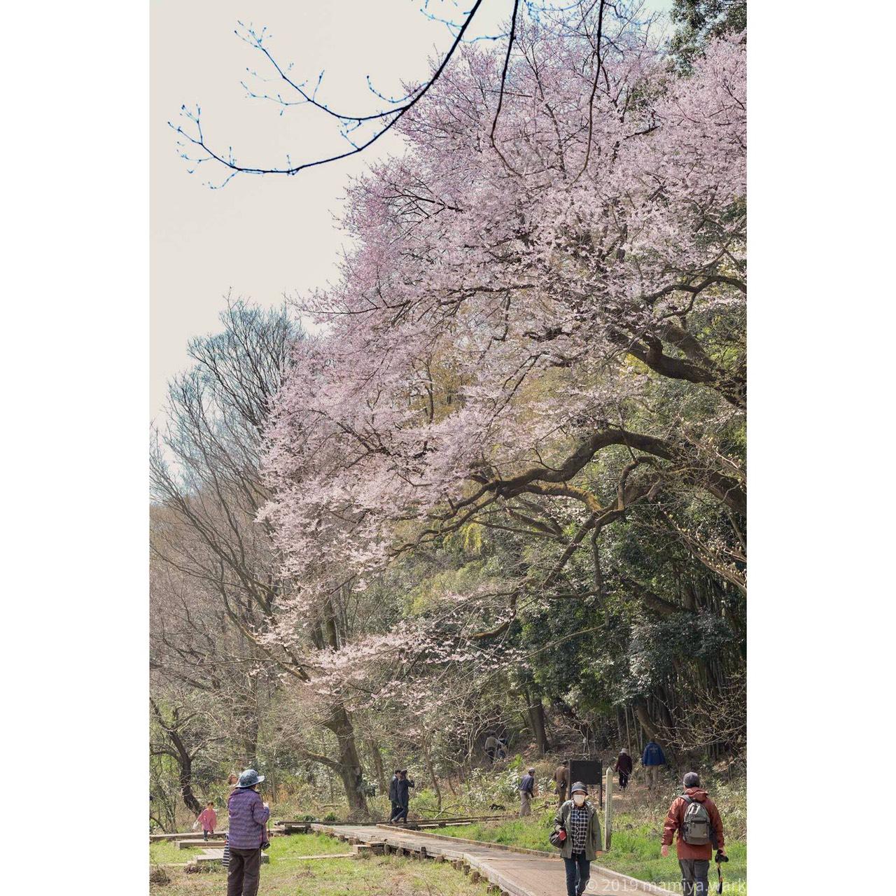 自然公園3