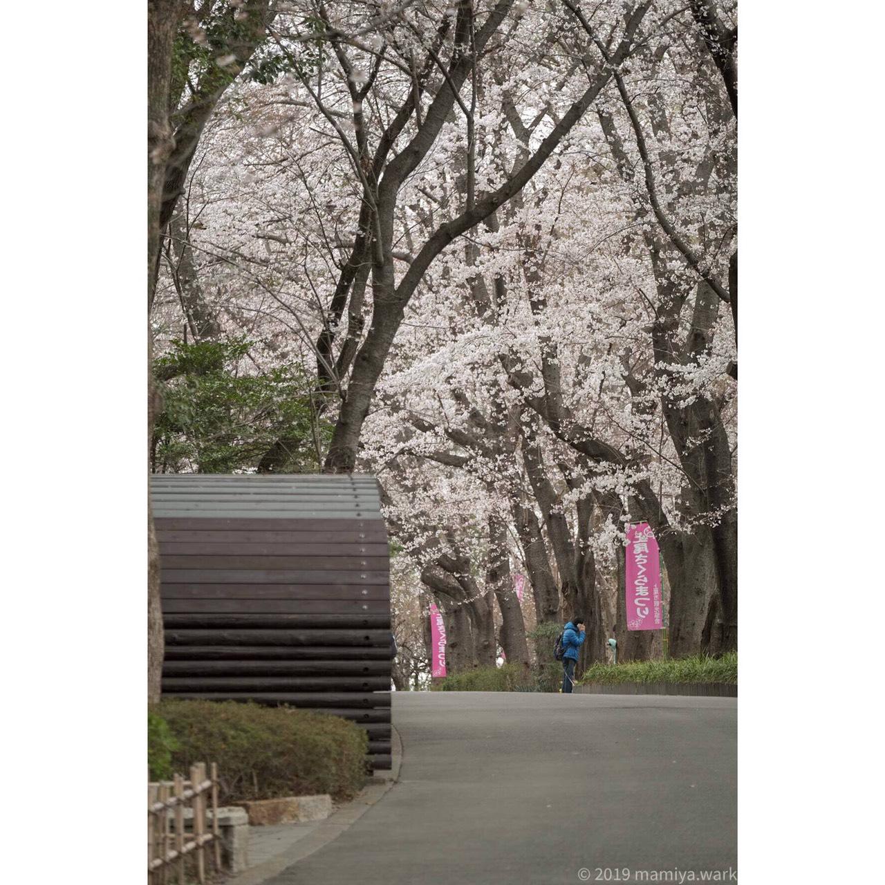 丸山公園1